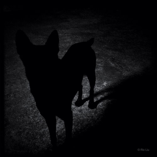 Streetphotography Blackandwhite Pocketgraphy Learn & Shoot: Single Light Source