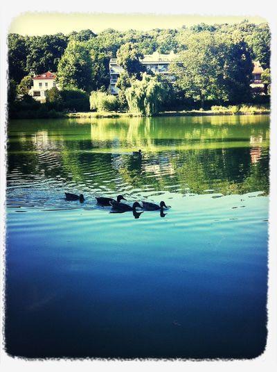 balade au bord du Lac ...