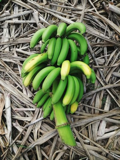 Backgrounds Green Color Nature Fruit Isolated High Angle View Field Close-up Green Color Banana Tree Banana Leaf Banana Indian Food Growing Fruit Salad Bunch