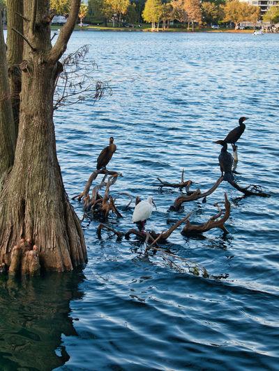 Bird Lake Water