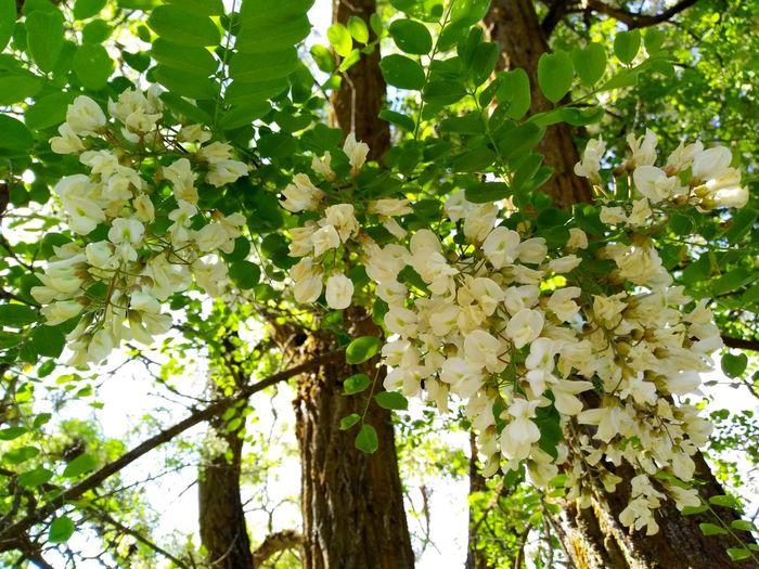 Tree Flower Branch Leaf Springtime Blossom Sky Green Color Plant Close-up Plant Life In Bloom Blooming Pollen Petal
