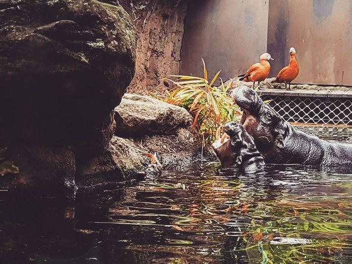 Birds perching on rock by water
