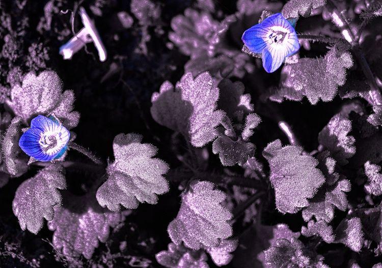 Close-up of flowers in aquarium