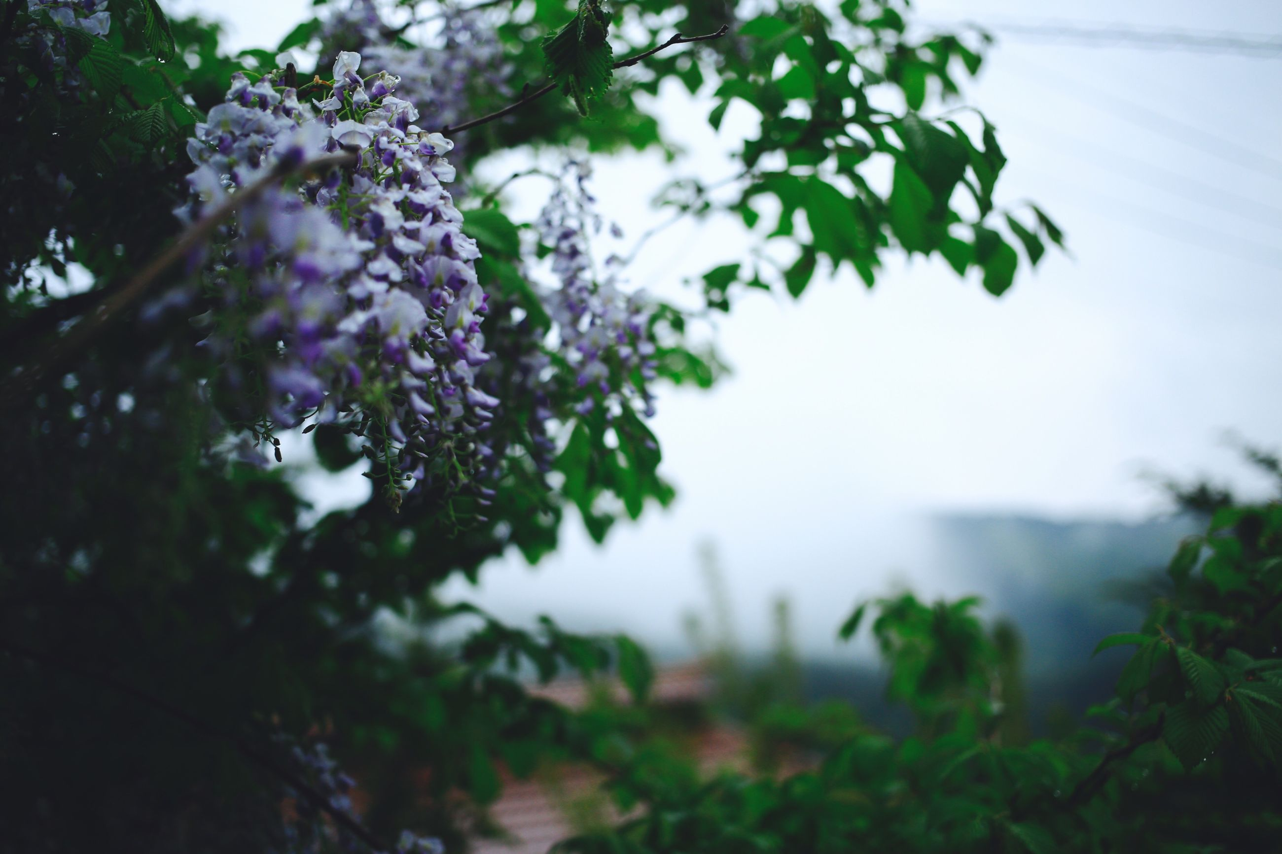 tree, growth, nature, beauty in nature, fragility, freshness, flower, day, focus on foreground, branch, selective focus, outdoors, no people, plant, springtime, close-up, sky