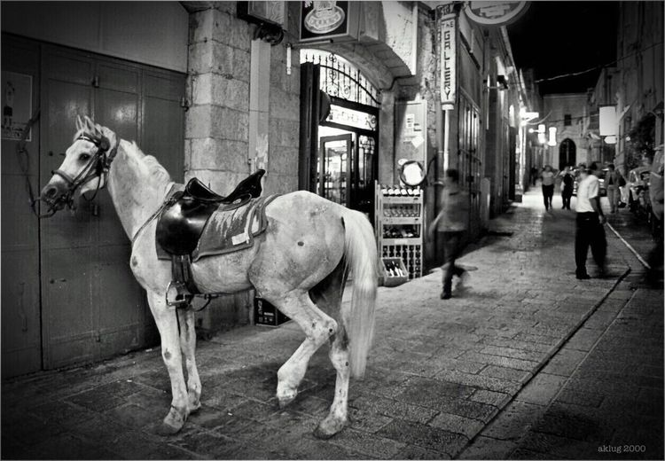 The withe horse / Yerusalem City / Old Town / Israel Israel Old Town Holy Land Old Houses History City Architecture Travelling Art Photography Black And White Andreas Klug Andreas Klug Photography