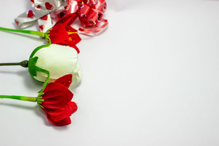 Close-up of red roses against white background