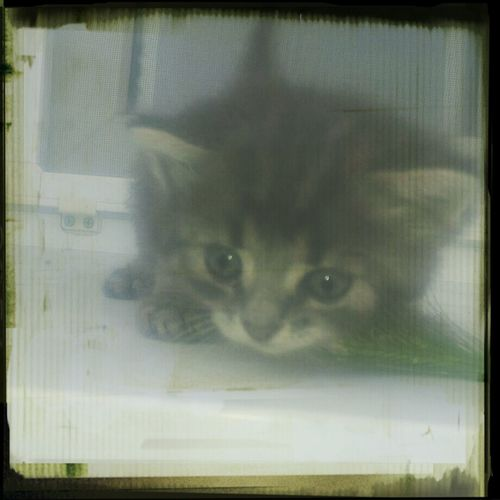 кошечка котёнок милые милы
