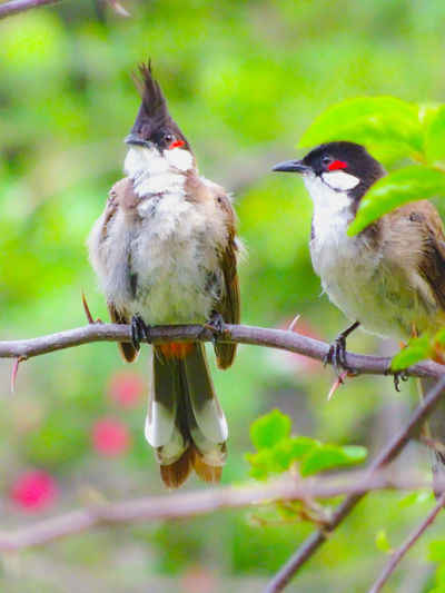 Your destiny is to fulfill those things upon which you focus most intently. So choose to keep your focus on that which is truly magnificent, beautiful, uplifting and joyful. Your life is always moving toward something. Beautiful Feathers Tree Leaves Bird Perching Two Animals
