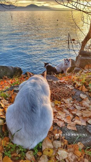 Lagotrasimeno Laketrasimeno Umbria Lago Lake Outdoors Animal No People Water Gatto Gatti Cat Cats Italia Mammal Italy
