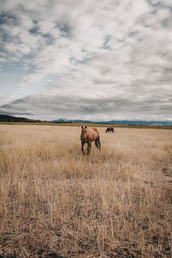 EyeEm Selects Animal Themes Field Cloud - Sky Mammal Day Sky Grass Nature One Animal Domestic Animals No People Outdoors Full Length Beauty In Nature Wild Horse