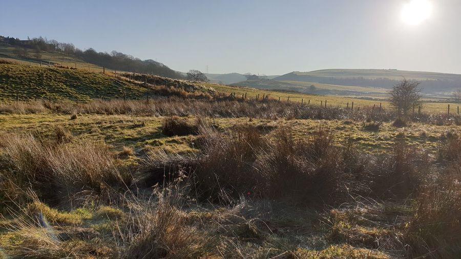 Rural scene in