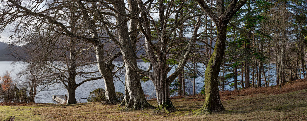 Photo Merge Photography Loch Maree Bank Bare Tree Beauty In Nature Branch Day Forest Growth Landscape Nature No People Outdoors Scenics Sky Tranquil Scene Tranquility Tree Tree Trunk Treer Line