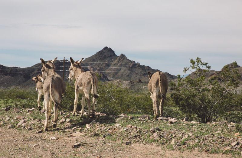 Donkeys On Field Against Sky