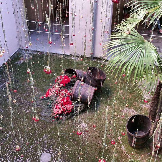 Plouen flors 💐 Naturelover_gr Girona Instaflors Tempsdeflors Igersgirona Gironaenamora Gironatempsdeflors Femgironatempsdeflorsambrenault Catalunyagrafias Gaudeix_cat Flowerstagram Clikcat