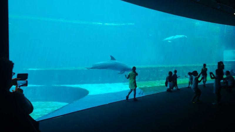 Greta e il delfino. Acquario di Genova. Genova Acquario Di Genova Tadaa Community