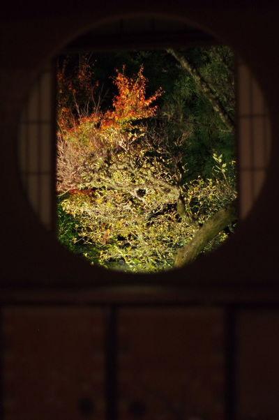 そうだ京都、行こう。 雲龍院 紅葉 紅葉🍁 ライトアップ 悟りの窓 Unryuin Autumn Leaves Autumn🍁🍁🍁 Beauty In Nature