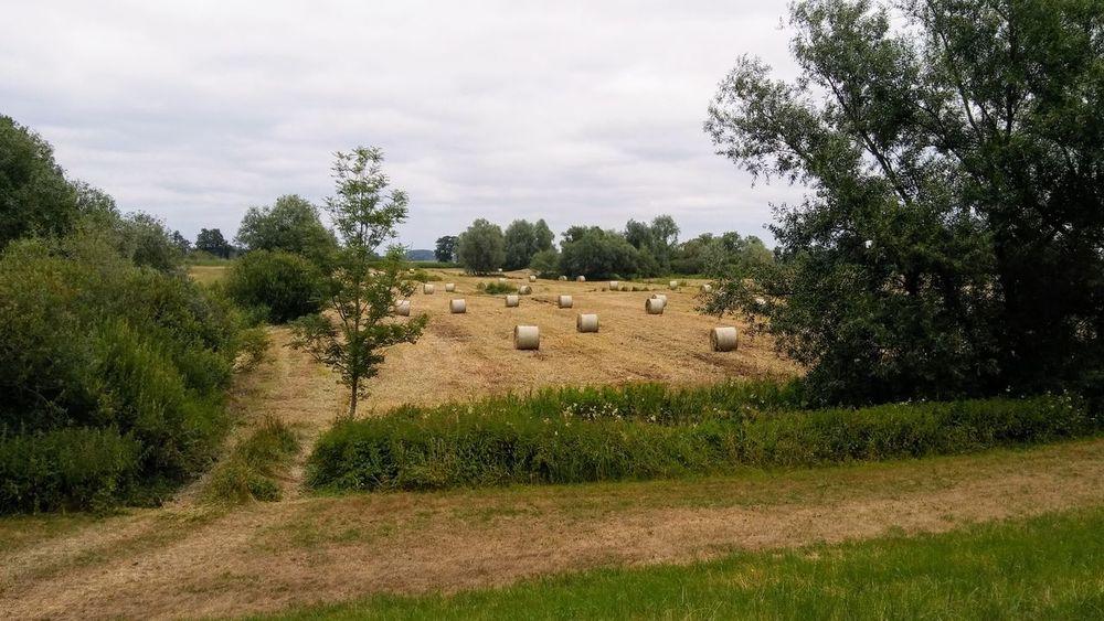 Tree Rural Scene Agriculture Field Sky Landscape Grass Farmland