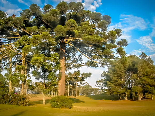Gramado, Brazil Beauty In Nature Day Grass Growth Landscape Nature No People Outdoors Palm Tree Scenics Serra Gaúcha Sky Sunlight Tranquility Tree