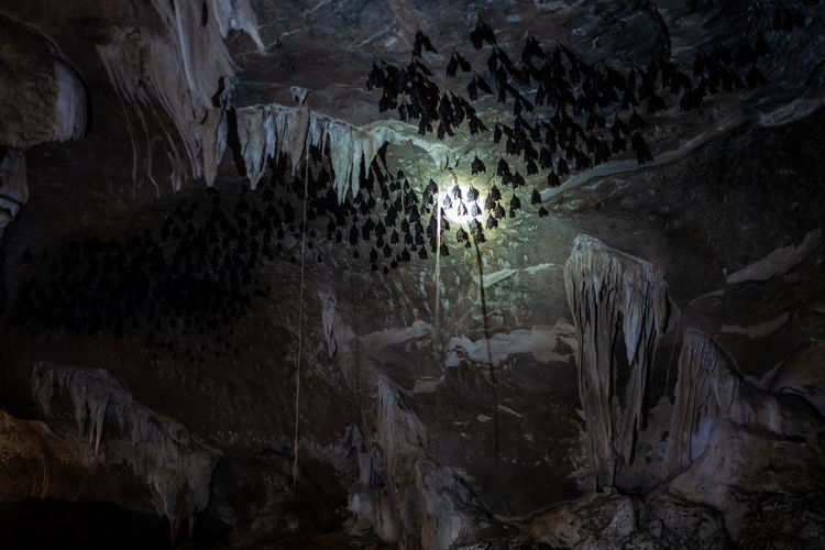 Langkawi Rock Rock - Object Cave Solid Rock Formation Geology Water Stalactite  Nature No People Physical Geography Beauty In Nature Outdoors Rough One Animal Pattern Animal Animal Themes Eroded Formation Bat Batcave