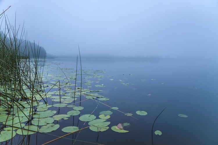 Morning on the lake Sunrise Beauty In Nature Water Tranquility Nature Plant Tranquil Scene No People Lake Leaf Outdoors Floating Mist Foggy Morning Morning Horizon Calm Landscape Leaves Summer