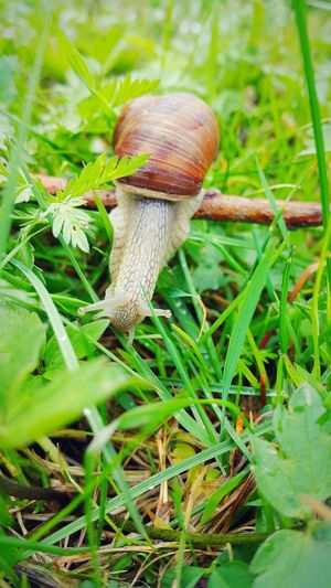 Nature_collection Nature Photography Popular Photos Mobile Photography Macro Photography Snail🐌 Snailfriend Beautiful Nature