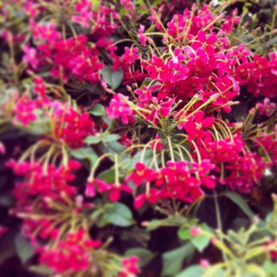 The Monsoon Bloom Goa