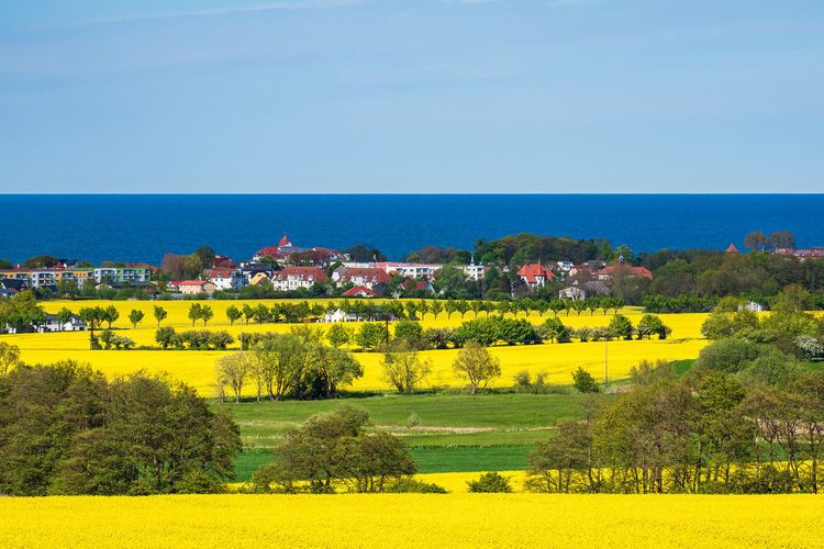 Canola fields on the Baltic Sea coast in Kuehlungsborn, Germany. Plant Sky Tree Landscape Land Scenics - Nature Nature Beauty In Nature Environment Yellow Day Rural Scene Field Architecture Outdoors Growth Water No People Tranquil Scene Built Structure Building Exterior Canola Field Rapeseed Baltic Sea Kühlungsborn Coast Shore Kuehlungborn Cloud - Sky