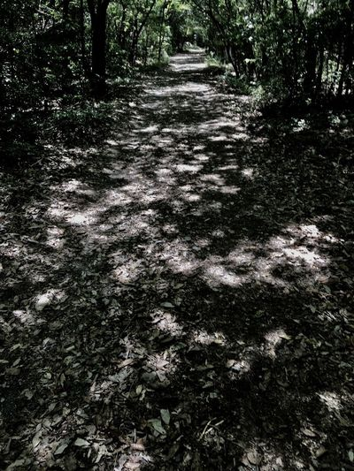 Subject : The Path with the Sunlight Filtering through the Trees on Both Sides. Beauty In Nature Nature Forest Tree sunlight The Way Forward Tranquility Day Outdoors No People . Taken in Higashi-Hiroshima , Japan on May 23, 2017 ( Submitted on June 20, 2017 )