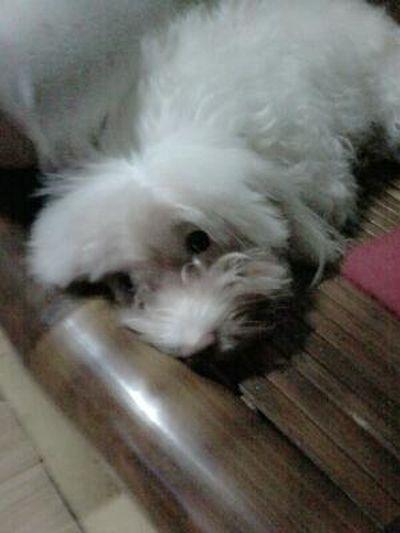 Hi Auuzzie! Your sooo cute ;) Hahahaha XD Petlover