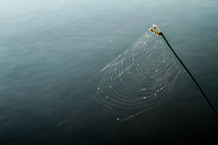 High Angle View Of Spider Web Over Lake