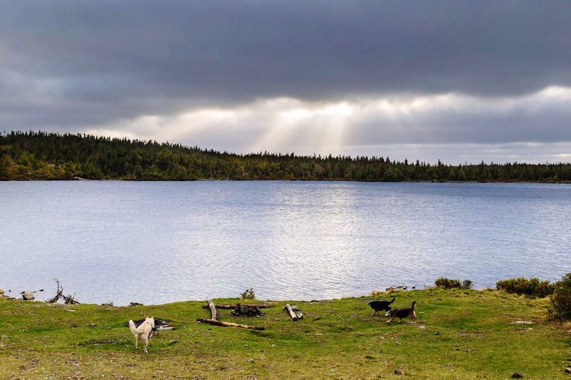 Dogs Nature Sunrays Clouds And Sky Camping Pond Wildlife & Nature