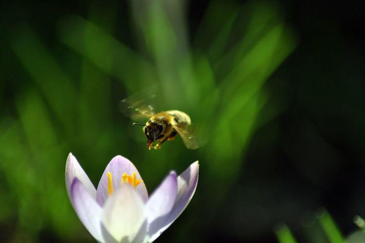 The Great Outdoors - 2015 EyeEm Awards Bees Flight EyeEm Nature Lover EyeEm Best Shots Eye Em Nature Lover EyeEm Nature Nature_collection Bees And Flowers