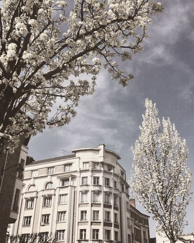France Trees White Building Exterior Built Structure Architecture Tree Low Angle View Plant Building Sky City No People Nature Day Branch Cloud - Sky Office Building Exterior Growth Outdoors Travel Destinations