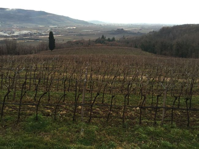 Valpolicella Wineyard Winelovers  Verona Italy