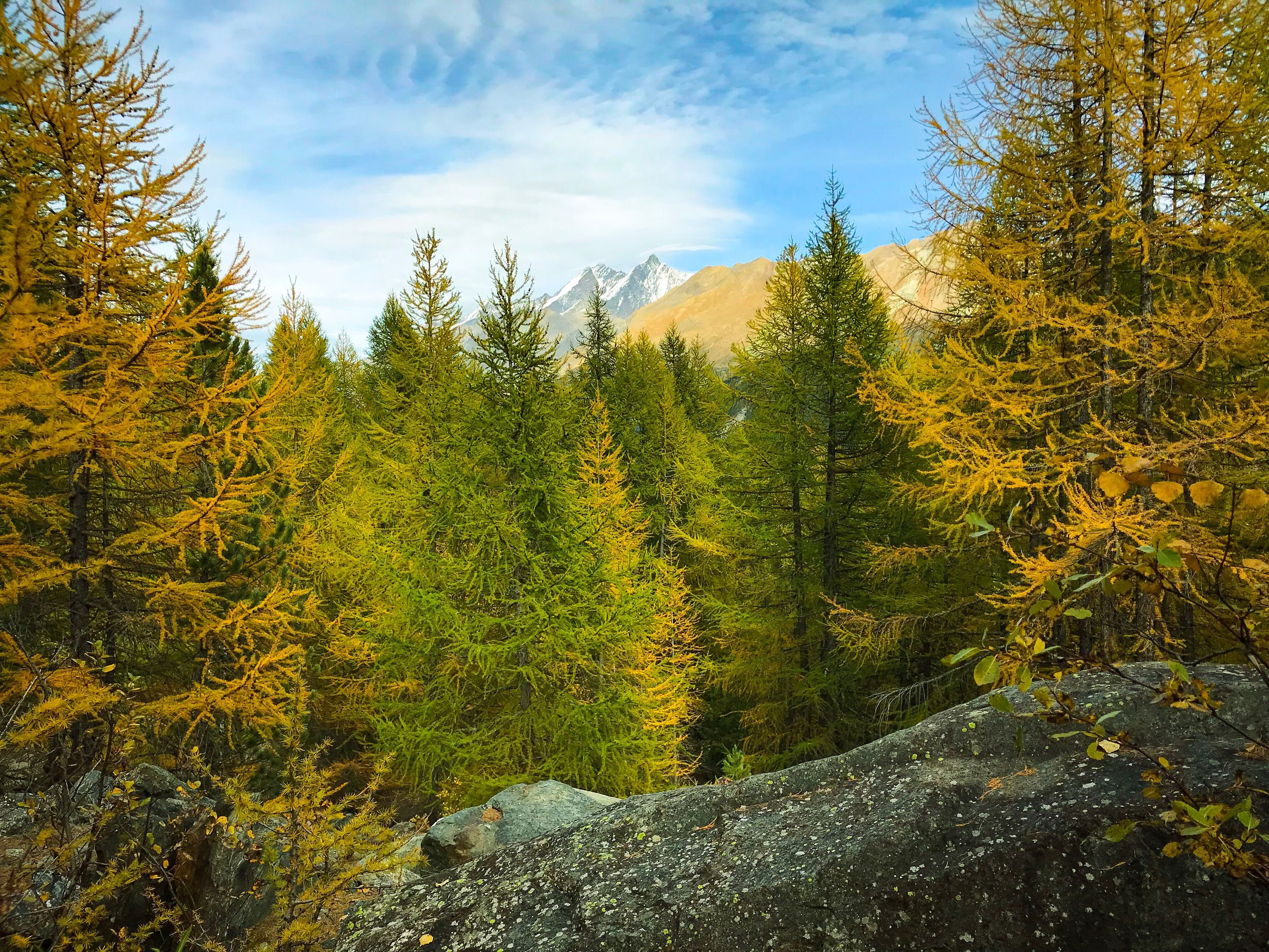 tree, nature, forest, sky, no people, tranquil scene, mountain, beauty in nature, day, pine tree, growth, tranquility, landscape, scenics, outdoors, autumn