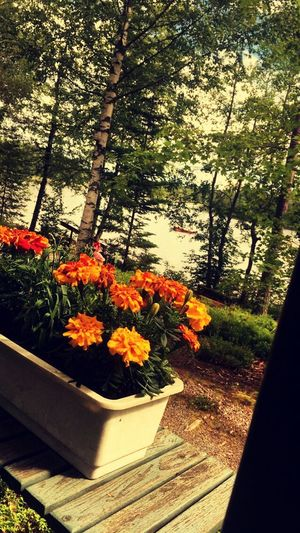 Growth Nature Flower Beauty In Nature No People Day Plant Freshness Sunlight Outdoors Tree Fragility Woods Iland Lake Lake View Summer Finland