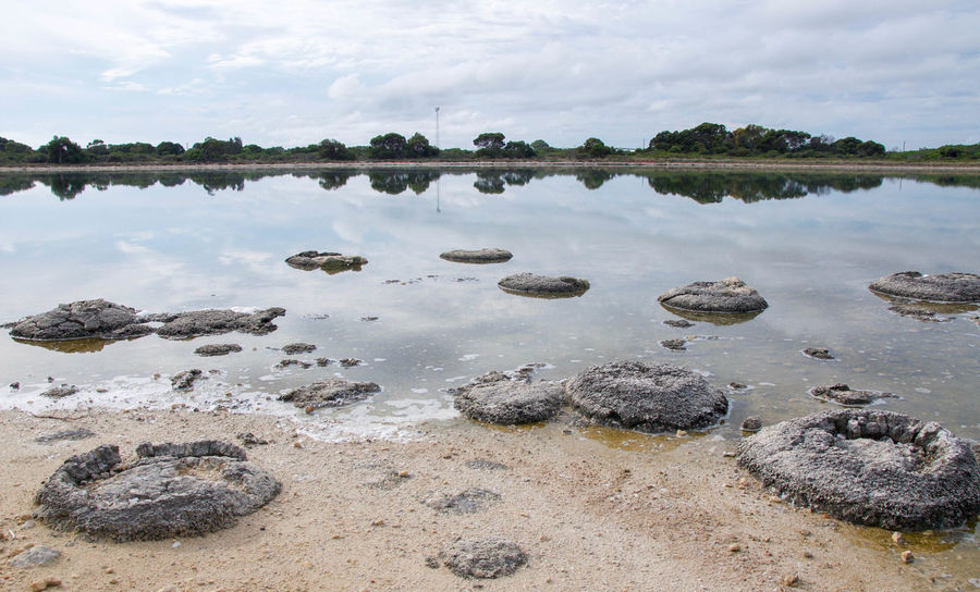 Lake Thetis on an overcast day with dry beach and stromatolites in Western Australia. Australia Beach Cluster Coastal Fossil Geology Lake Lake Thetis Layered Living Marine Natural Nature Phenomena Rare Reflection Saline Lake Sand Scenics Sediment Stromatolites Thetis Thrombolites Waterfront Western Australia