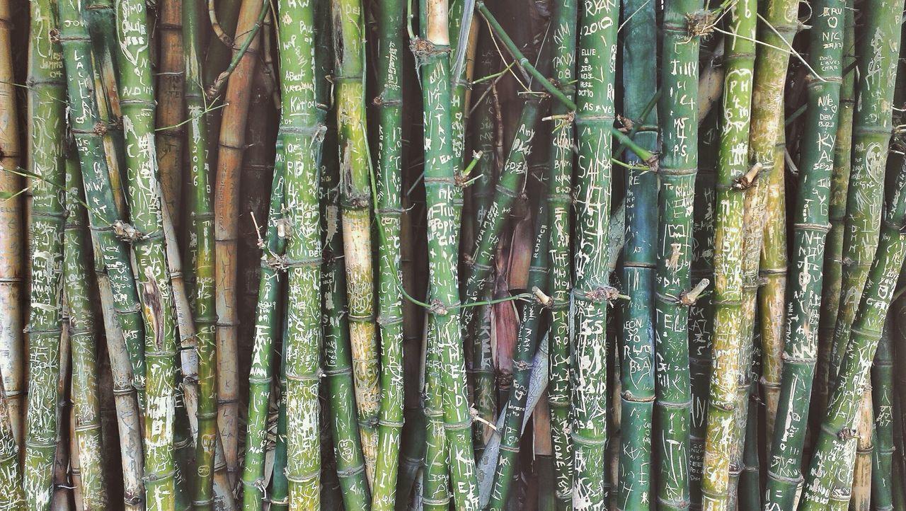Full frame shot of bamboos with graffiti