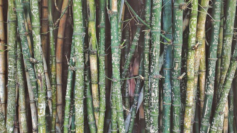 Bamboo Nature_collection Graffiti Shootermag Graffiti Bamboo at the Adelaide Botanic Gardens