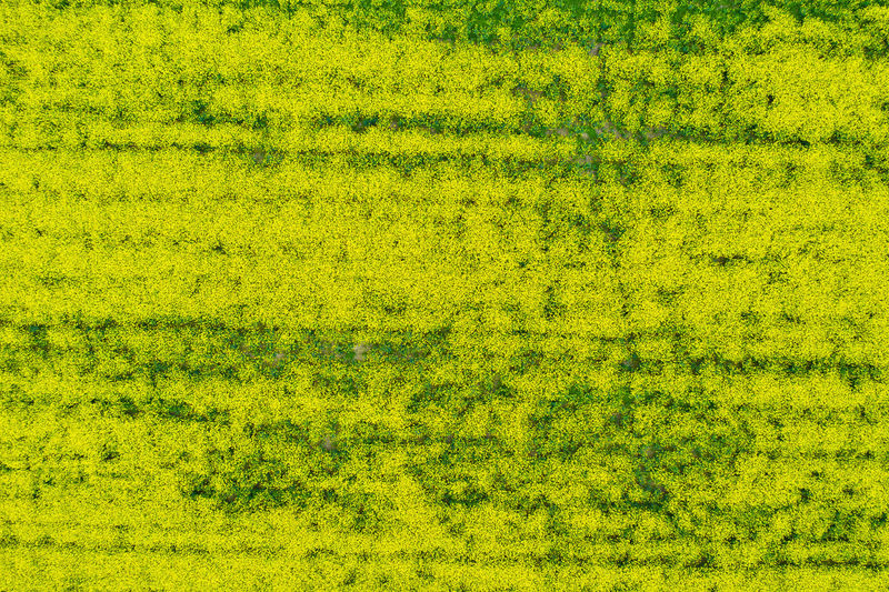 Backgrounds Green Color Full Frame Yellow No People Grass Environment Plant Nature Landscape Vibrant Color Day Textured  Pattern Aerial View Field Beauty In Nature Outdoors Foliage Rural Scene Swamp Textured Effect