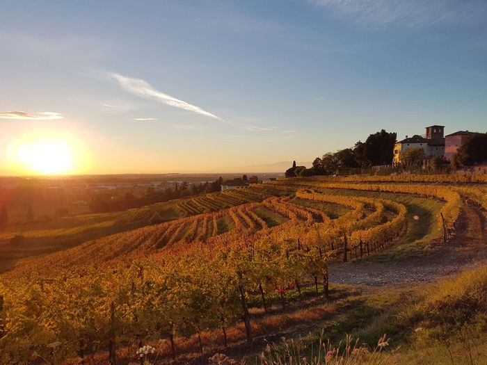 Scenic view of sunset at vineyard against sky