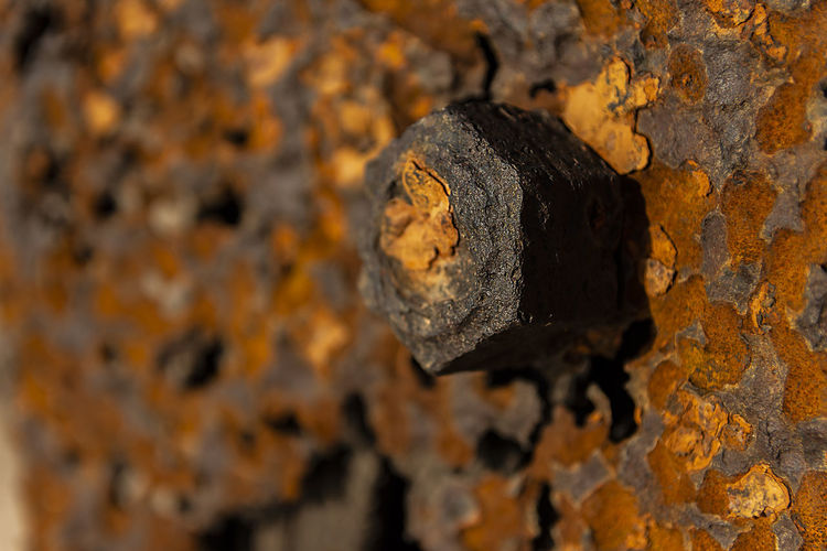 Rusty screw in an old pier Pier Backgrounds Close-up Day Focus On Foreground Lichen Metal Nature No People Old Old Ruin Plant Bark Rough Run-down Rusty Rusty Metal Screw Selective Focus Texture Textured  Tree Tree Trunk Trunk Weathered Wood - Material