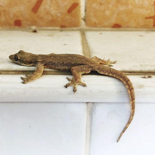 Lizard EyeEm