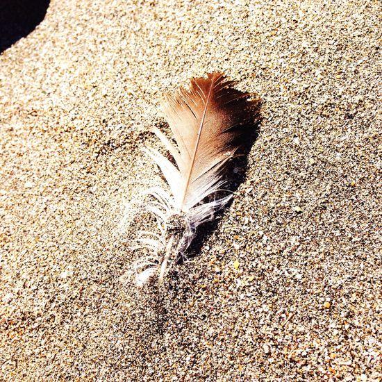 ONJUKU Beach Sea Feather  Happyday