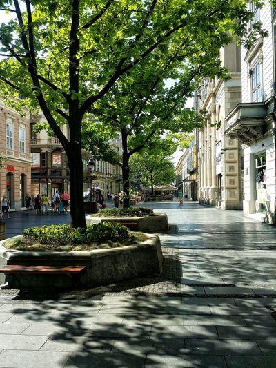 Belgrade,Serbia Knez Mihajlova EyeEm Best Edits Trees Beautiful Buildings Culture of street 😌😌
