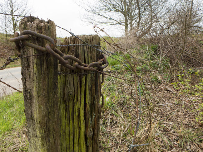 Bare Tree Chain Detail Farm Fence Field Gate Heavy Heavy Metal Iron Nature Old Pale Private Rural Scene Rusty Rusty Metal Security Steel Timber Tree Weathered Wire Wood Wooden