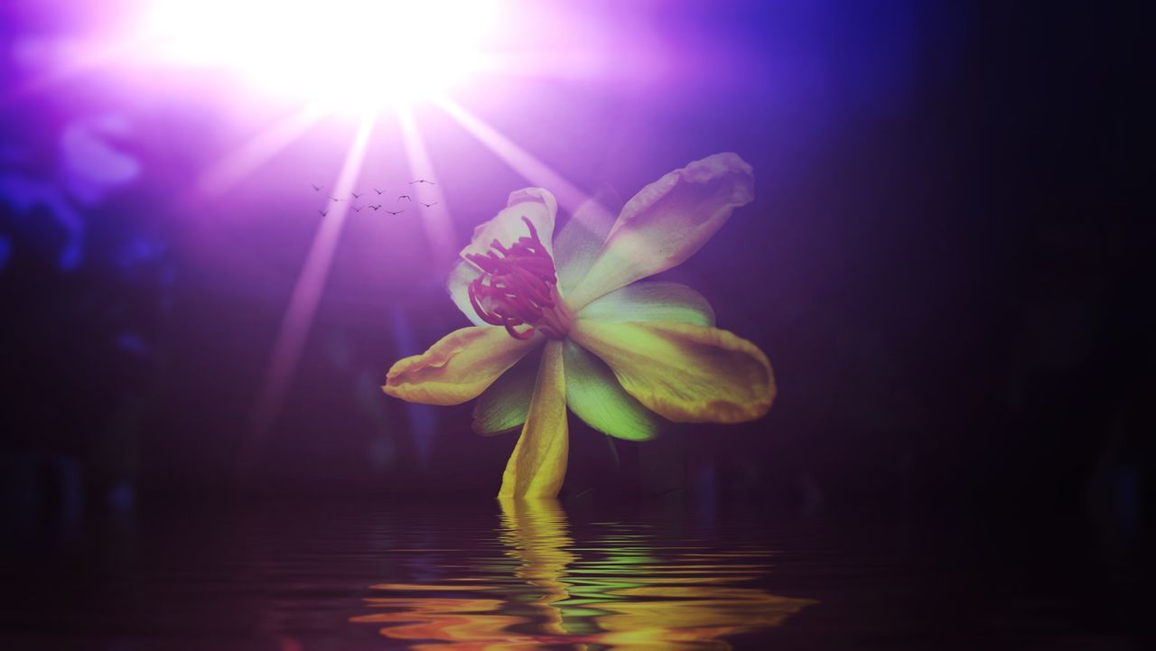 flower, water, beauty in nature, nature, lens flare, petal, freshness, reflection, sunbeam, fragility, growth, no people, sunlight, flower head, close-up, outdoors, day