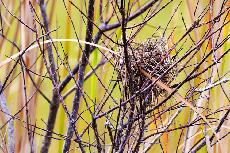 Animal Animal Nest Animal Themes Animal Wildlife Animals In The Wild Bare Tree Bird Bird Nest Branch Close-up Complexity Day Dead Plant Dry Focus On Foreground Nature No People Outdoors Plant Selective Focus Tangled Tree Vertebrate