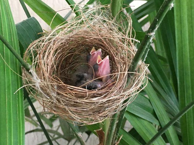 Birds Nest Nature Goiânia Brazil First Eyeem Photo
