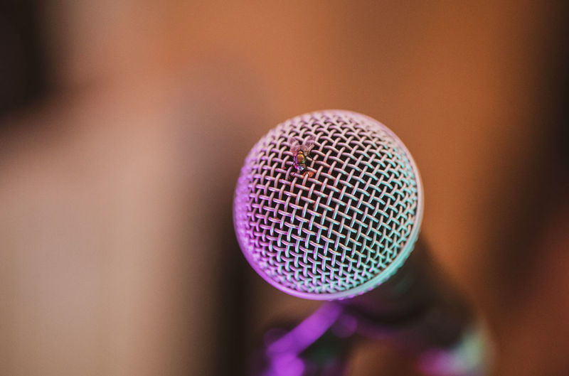 Close-up of insect on microphone